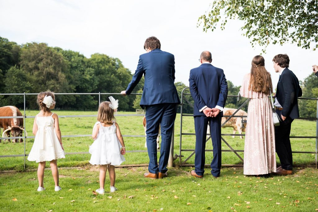 Countryside wedding with cows