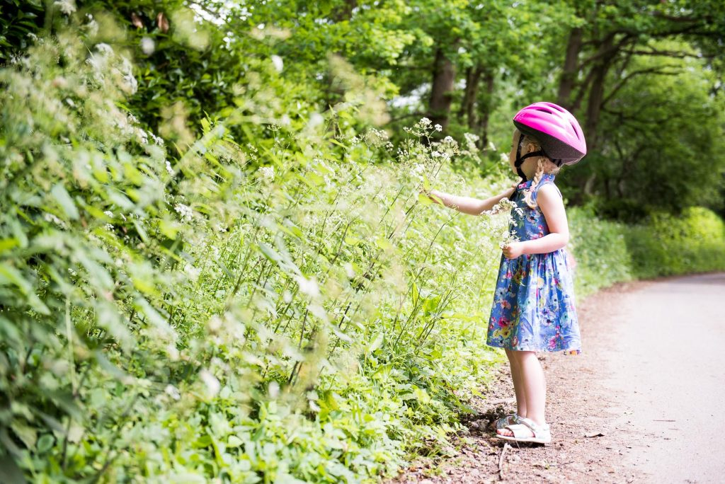 Little girl picks Cow Parsley countryside walk