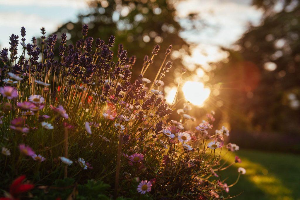 Sunset at Oatlands Park Hotel