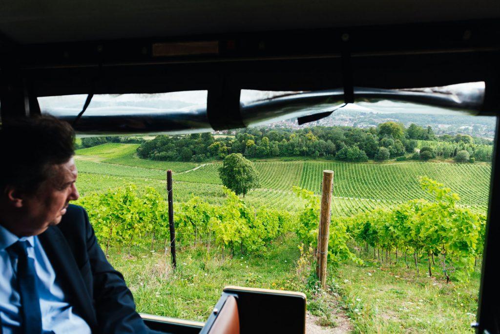 Denbies Wine Vineyards