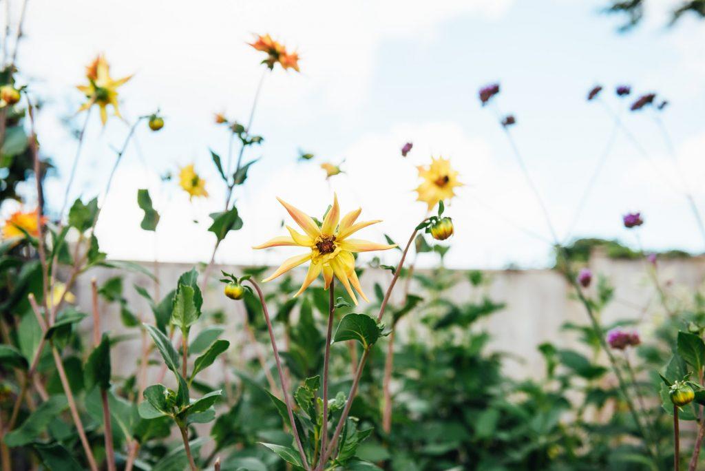 Flower garden at home
