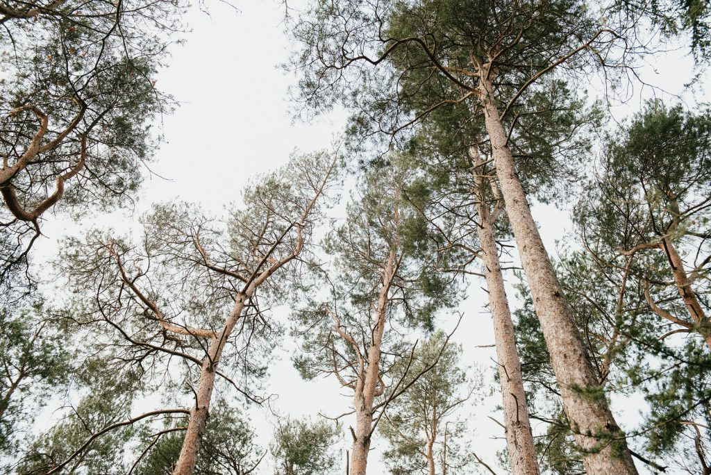 Trees in the landscape of Painshill Park, Surrey